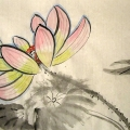 lotus_alexandra2