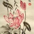 lotus_olga