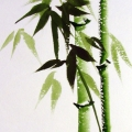 Зеленый бамбук