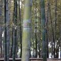Бамбук, у-син фото
