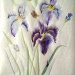 Iris zv1