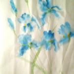 Iris zv6
