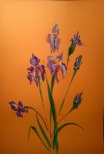 Iris1а