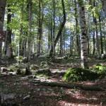 Биоградска гора. Черногория