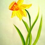 Narciss01