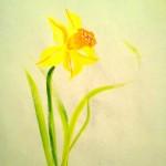 Narciss03
