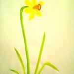 Narciss03a