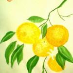 Apelsin1a