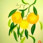 Apelsin7