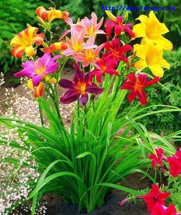 Цветы лета фото