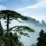huangshan 6